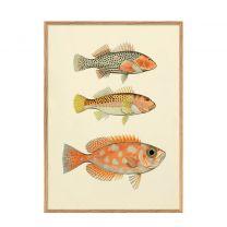 wanddecoratie The Dybdahl Co Fishes (50x70 cm) (50x70 cm cm)